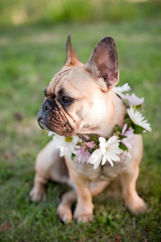 زفاف - Pets!