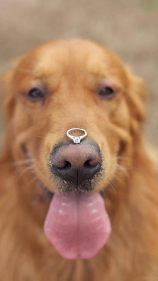 Свадьба - Мой большой фальшивый Свадебные