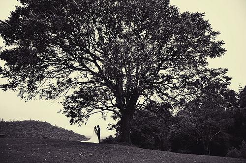 Hochzeit - Big Tree