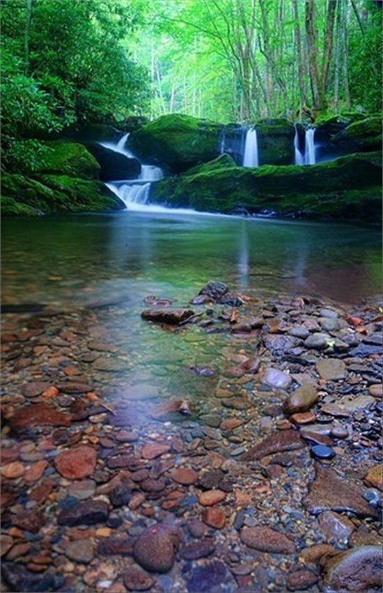 Свадьба - Deep Forest Green, Tremont, Tennessee