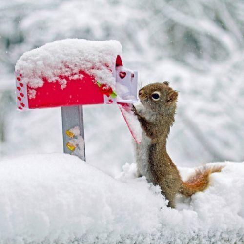 Wedding - Adorable Animals