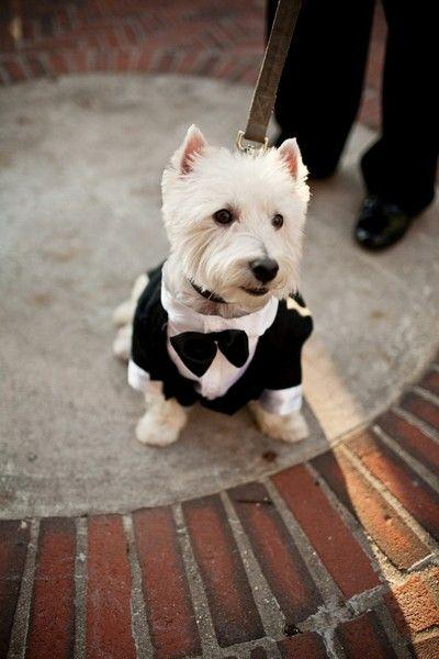 Wedding - Dapper Dog!