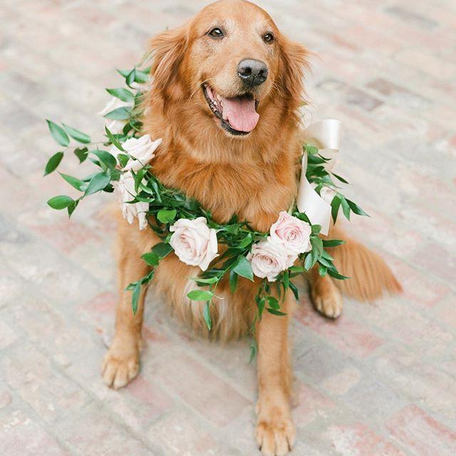 Hochzeit - Martha Stewart Weddings