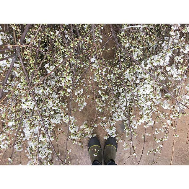 Nozze - Poppies & Posies