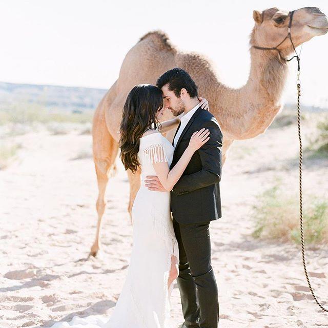 Wedding - Wedding Sparrow