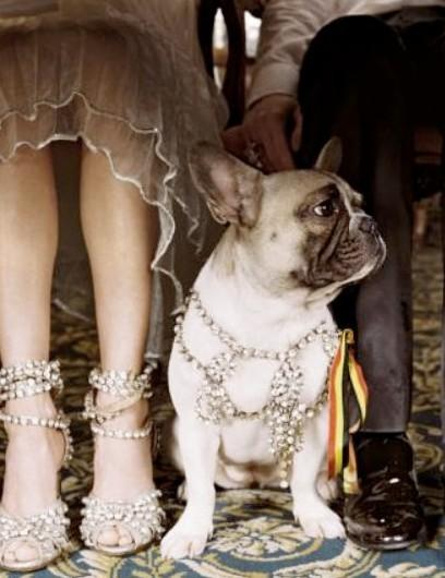 Свадьба - Домашние животные в свадебной церемонии, мопс драгоценности