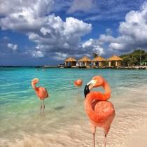 wedding photo - Honeymoon Destinations