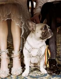 wedding photo - Pets in wedding ceremony, A pug in jewels